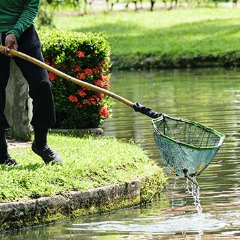 Expert Pond Cleaning